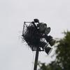 Eagles_nest_021