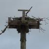 Boathouse_nest2