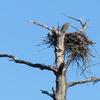 Washburn_nest