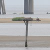 Osprey_little_neck_2012_048