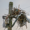 Newnests_(22_of_25)