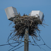 Newnests_(16_of_25)