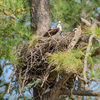 Newnests_(8_of_25)