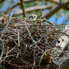 Newnests_(10_of_25)