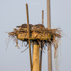 New_fm_nest_with_3-