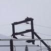 Dscf0341_osprey_nest
