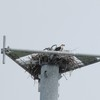 Osprey_cell_towers_012