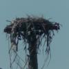 Osprey_nest_platform_csx_hub_south_side_locust_point__md