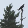 Washburn_bird_sep21