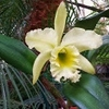 20140319_131411_orchid