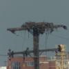 Osprey_nest_port_of_baltimore_north_side_locust_point_firestone_baltimore_md_10-2-2021