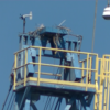 Osprey_nest_domino_sugar_crane_locust_point__md_9-24-2021-4