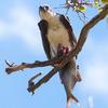 Qccoquan_wildlife_refuge-33