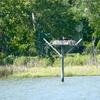Osprey_pole_pungo