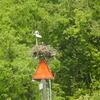 Osprey_watch_nest_013
