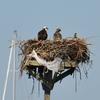 Nest_2b