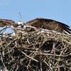 Nest_4d