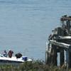 Ospreynest_boat_072612_chbaygolfcourse_6203