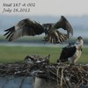 Nest_4_7-26-12_3_chicks_lift_off_03_ccb