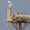 72_osprey_longmong_fairgrounds