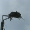 Cr100a_osprey_nest