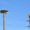 Osprey_nest_1590_0609_20130222