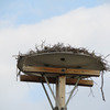 Osprey_nest_1596_at_4th_street_and_lincoln_cir_n_0349_20130210