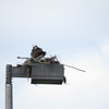 _1604_osprey_nest_edgewater__drive_light_pole_0795_20130301