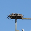 Warfighting_lab_osprey_nest