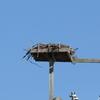 Warfighting_lab_osprey_nest