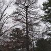 More_eagles_007