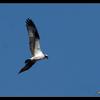 Eagle06
