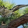 Rawbonosprey1312012