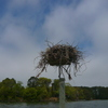 20130424_-_osprey_nests_004