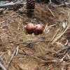 20130424_-_osprey_nests_014