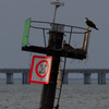 3-15-13_channel_marker_5_osprey_nest