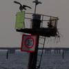 4-7-13_channel_marker_5_osprey_nest-2