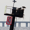 4-26-13_channel_marker_5_osprey_nest