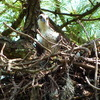 2678-osprey_nest-longcove-15th_fairway_1