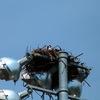 2674-osprey_nest-chaplinpark_1