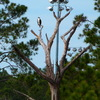 2674-osprey-chaplinpark-thefolly_2