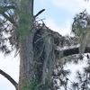 2648-osprey-knollwoodhhp_1