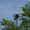 2521-ospreynest-radiotower-1