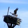 Birds_061