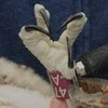 Osprey_banding_lynnhaven_2013_029