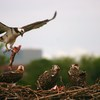 Feeding_time_nest