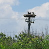 Bbnwr_fishing_platform_2013_020