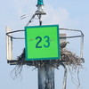 Osprey_green23_2013_003