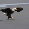 Lg_eagle_dance