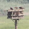 Nest_7_july_8